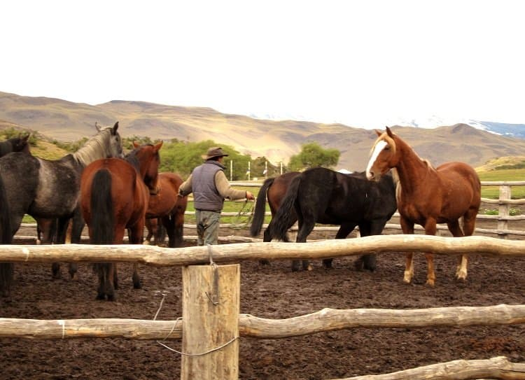 lasso Patagonias Gauchos: The Cowboy Way (Photo Essay)