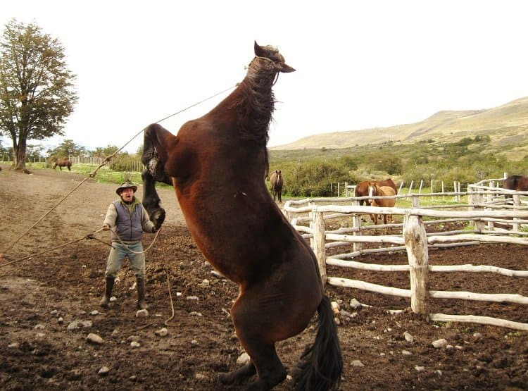 not a happy horse Patagonias Gauchos: The Cowboy Way (Photo Essay)