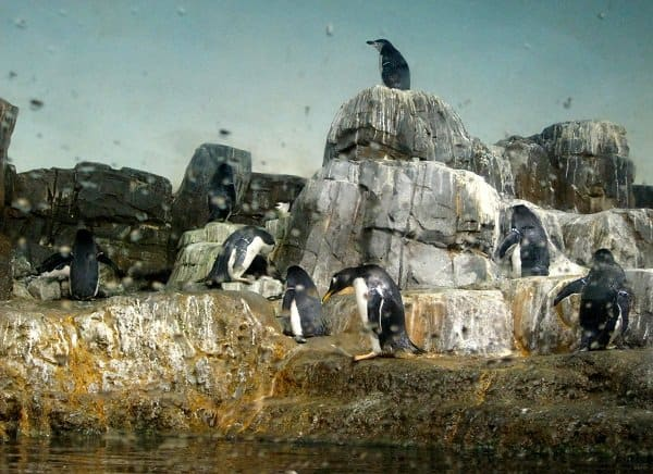 central park zoo penguins Travel Memories: USA Part 1   My Two Cities