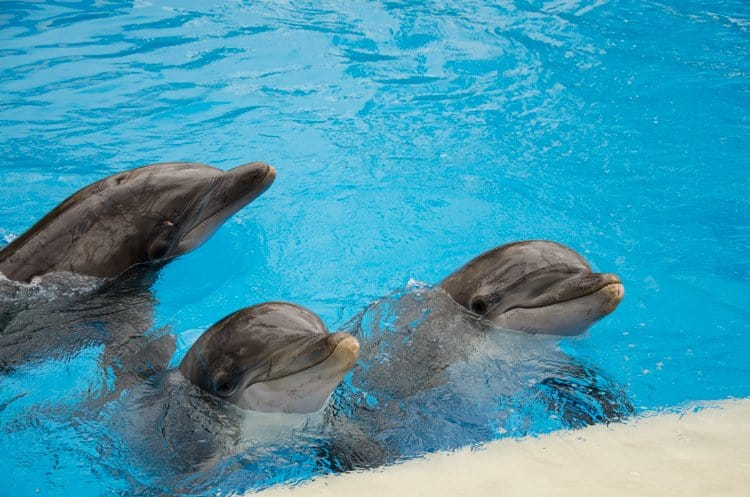 mirage hotel dolphins