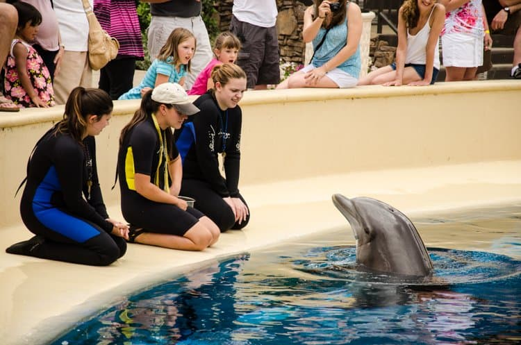 mirage trainer for a day dolphins