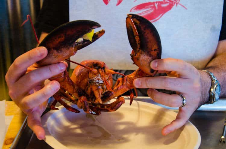 maine lobster whole