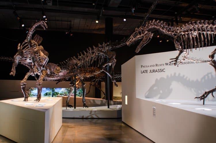 paleontology houston museum natural science