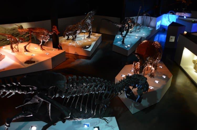 hall of paleontology hmns