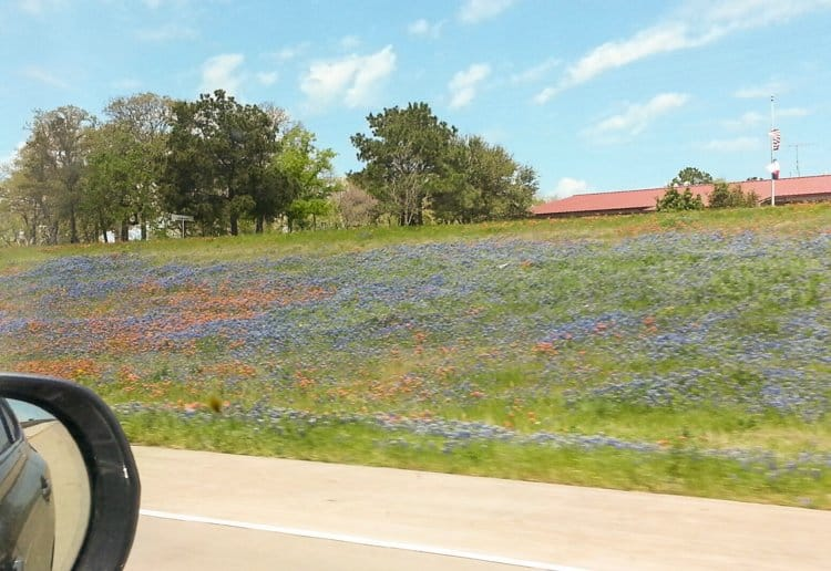 blue bonnets 132201 Roadside BBQ: Jerry Mikeskas, Columbus, TX