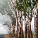 forest-road-coorg-india-2